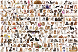 World Of Dogs Print