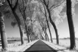 A Tree Lined Road Through Farmland in Damme Belgium Shot Photographic Print by  Red Square Photography