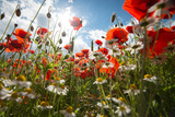 A Large Field of Poppies and Daisies Near Newark in Nottinghamshire, England Uk Photographic Print by Tracey Whitefoot