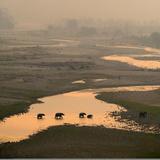 Elephants Crossing River Photographic Print by Ganesh H Shankar