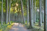 Coastal Beech Forest with Path, Nienhagen, Bad Doberan, Baltic Sea, Western Pomerania, Germany Photographic Print by Geoff Cannon