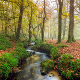 A Stream Winding its Way Through Misty Autumn Woodland on Bodmin Moor in Cornwall Photographic Print by Helen Hotson