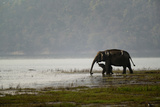 Elephants in Water Photographic Print by Ganesh H Shankar
