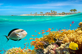 Underwater View at Fishes and Coral Reef, Marsa Alam, Abu Dabbab Bay, Red Sea, Egypt Photographic Print by Jan Wlodarczyk