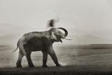 Tusker Dust Bath Photographic Print by Ganesh H Shankar