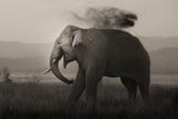 Tusker in Rain Photographic Print by Ganesh H Shankar