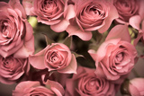 Big Bouquet of Pink Roses Horizontal Photographic Print by Denis Karpenkov