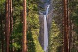 Lower Yosemite Falls Through the Conifer Trees of Yosemite Valley, California, USA Photographic Print by Adam Burton