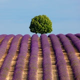 Tree on the Top of the Hill in Lavender Field Photographic Print by Nino Marcutti