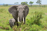 Masai Mara Elephant Photographic Print by  Jim Varley Photography
