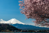 Mount Fuji with Blooming Cherry Tree as Seen from Lake Kawaguchi, Yamanashi Prefecture, Japan Photographic Print by Stefano Politi Markovina