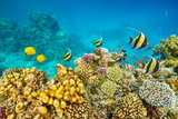 Red Sea - Underwater Diving Picture of Fish over the Coral Reef, Marsa Alam, Egypt Photographic Print by Jan Wlodarczyk