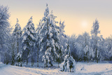 Fir-Trees under Snow. Sunny Day. Horizontal Format Photographic Print by Oleksiy Yakovlyev
