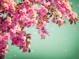 Sakura Flowers Background Art Design. Spring Sacura Blossom Photographic Print by Linda Laegreid Johannessen