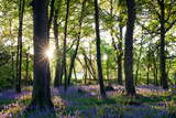 Sun Bursting Through the Trees Casting Shadows over a Carpet of Bluebells Photographic Print by Helen Dixon