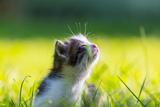 Kitten Photographic Print by Linda Laegreid Johannessen