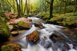 Early Autumn Along the Banks of the River Fowey at Golitha Falls Photographic Print by Helen Dixon