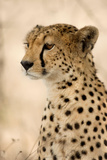Close-Up of a Cheetah, Serengeti, Tanzania Photographic Print by Eric Isselée