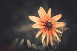 Summer Flower Photographic Print by Alexey Rumyantsev