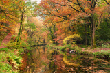Autumn Woodland Along Banks of River Teign Photographic Print by Helen Dixon