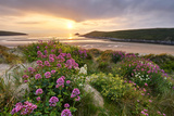 Wild Flowers Growing Amongst the Dunes at Crantock, Cornwall Photographic Print by Helen Dixon