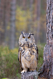 Eagle Owl, Bubo Bubo Photographic Print by Val And Greg Duncan