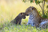 Leopard (Panthera Pardus), Female, Cuddling with Her Cub, Maasai Mara National Reserve, Kenya Photographic Print by Klaus-Peter Wolf