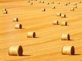 Round Straw Bales in Field Near Newburgh Fife Scotland Photographic Print by David Robertson