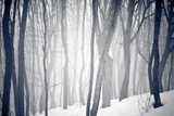 Winter Forest Photographic Print by Alexey Rumyantsev