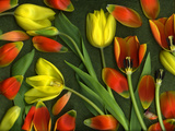 Colorful Tulips Isolated Against Green Background Photographic Print by Christian Slanec