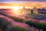 Sun Is Setting over a Beautiful Purple Lavender Filed in Valensole. Provence, France Photographic Print by Beatrice Preve