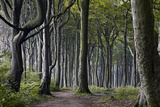 Ghost Forest Nienhagen, Mecklenburg-Vorpommern, Germany Photographic Print by Nico Stengert