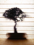 Bonsai Tree Photographic Print by J Tweddle