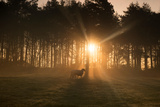 Golden Morning Light Through Trees in the Peak District, Derbyshire England Uk Photographic Print by Tracey Whitefoot