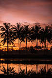 Sunset Landscape Creating an Orange and Pink Sky with the Reflection of Palm Trees in Water Photographic Print by Harshvardhan Sekhsaria