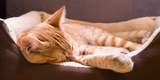 Sleeping Orange Cat in Cat Bed Photographic Print by Deyan Georgiev