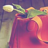 A Tulip in a Handbag Photographic Print by Joana Kruse