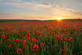 Poppy Field in Full Bloom, Cornwall Photographic Print by Helen Dixon