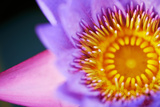Macro-Closeup Image of a Violet Flower Photographic Print by Deepak Jalna Oomnarayanan