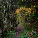 Shotley Grove Photographic Print by Chris Mcilreavy