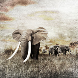 Grunge Image of Walking Elephants Photographic Print by Svetlana Foote
