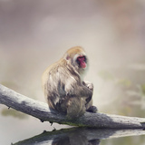 Japanese Macaque on a Log Photographic Print by Svetlana Foote