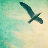 Close-Up of a Gull Flying in a Texturized Sky Photographic Print by Tim Kahane