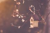 Robin Nesting in a Bird House in a Almond Tree Lámina fotográfica por Marianne Winther