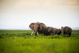 African Elephant Herd at Sunset in Amboseli National Park, Kenya Photographic Print by Santosh Saligram