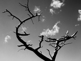 Dead Tree and Branches Against Sky, Northern Ireland Photographic Print by Alain Le Garsmeur