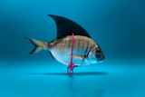 Fish Disguised as a Shark Photographic Print by Marianne Winther