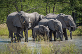 Group of Elephants Drinking at Water Hole Photographic Print by Nick Dale