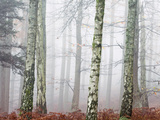Trees in Mist at Dawn Photographic Print by Tim Kahane