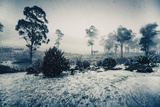 Ice Cold Winter Background of Falling Snow Flakes in Chilled Blue Pasture Photographic Print by Ryan Jorgensen